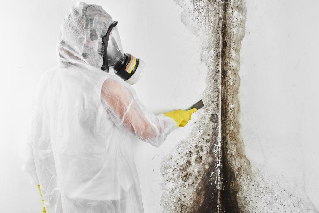 Indoor Mold Found